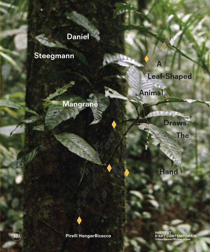 daniel-steegmann-mangrane.jpg